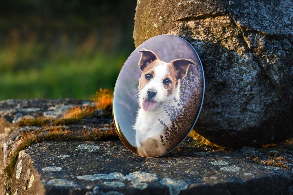 Pamätník pre psa